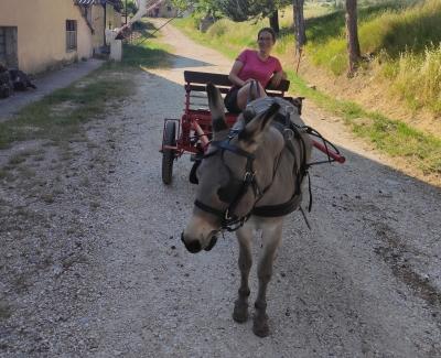 Calesse con asino - Agriturismo Nizzi ad Assisi - Umbria