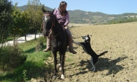 Agriturismo Nizzi - Cavalli